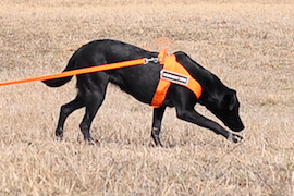 Oil Detection Canine Chiron's Nika